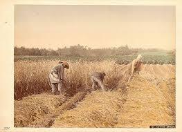 農民.jpg